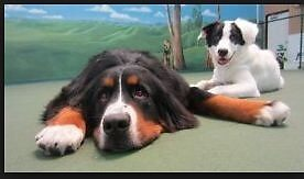 Canine Training Oceanside by jamesnoa69
