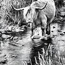 Highland Cow Sketch. Ballygown. Isle of Mull. Scotland. by PhotosEcosse