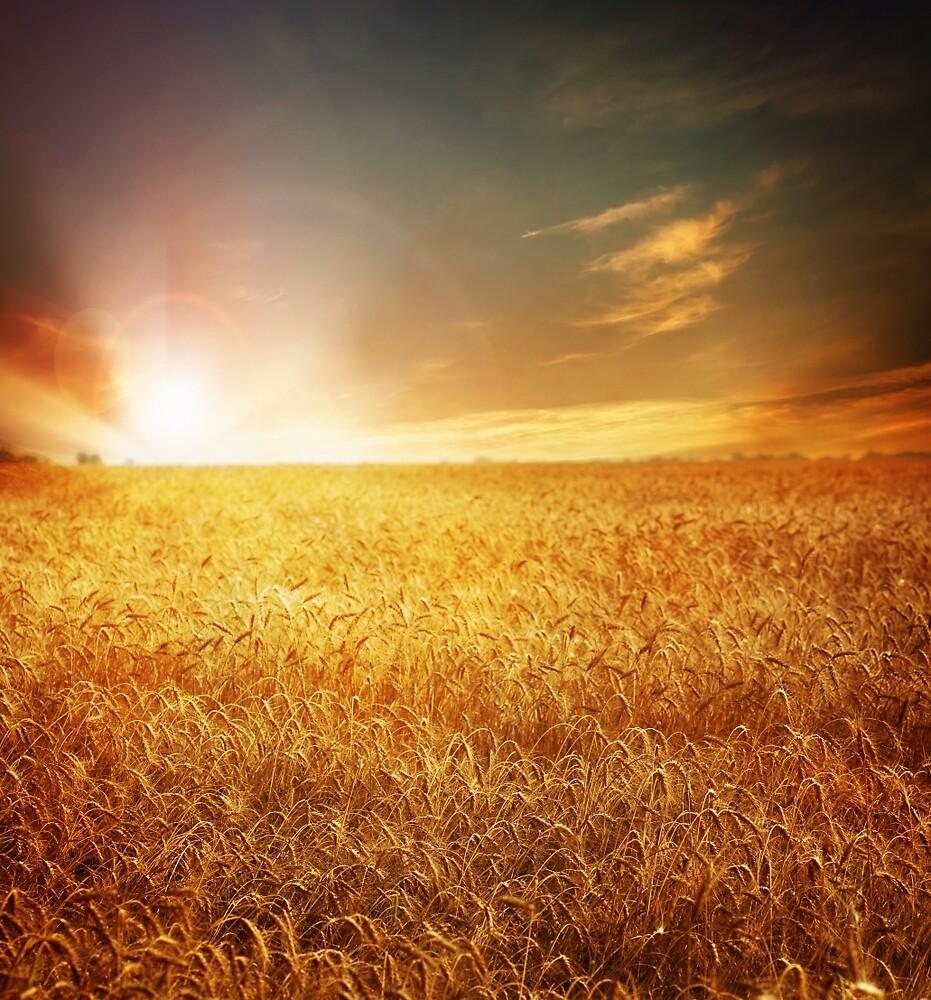 Love Field by johnsonkarlena