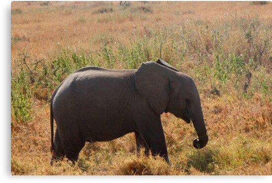 Baby Elephant in Serengeti by Jenna-Grieve