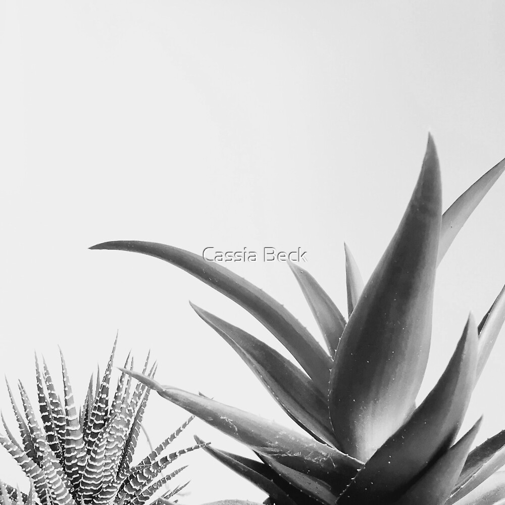 Succulents II by Cassia Beck