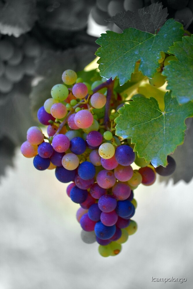Cluster of Grapes by lcampolongo