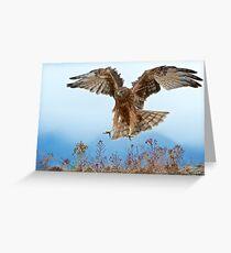 Wild NZ Kahu Hawk attack Greeting Card