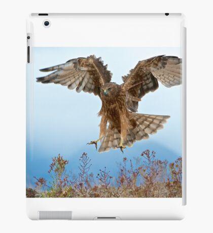 Wild NZ Kahu Hawk attack iPad Case/Skin