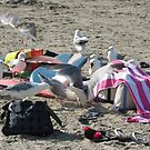 Seagull picnic by Mike Shell