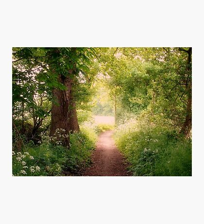 Follow my dreams!! Path to Fairyland!  Photographic Print