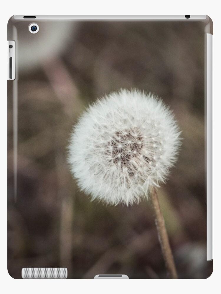 Dandelion in Siberia by samsheff
