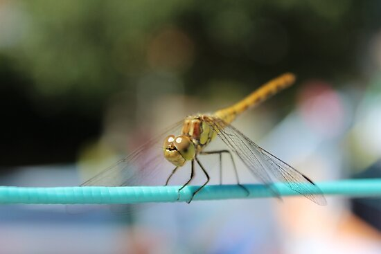 Dragonfly by ttheott