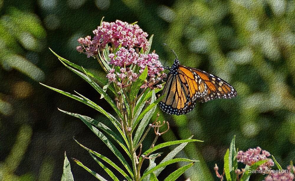 Monarch on Milkweed by Sandy Keeton