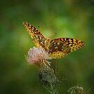Aphrodite Fritillary Butterfly by Sandy Keeton