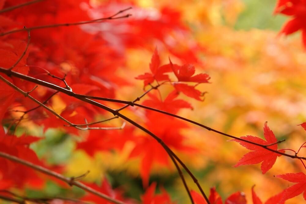 Autumn Fire by ArtByRosalind