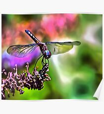 Dragonfly In Green and Blue Poster