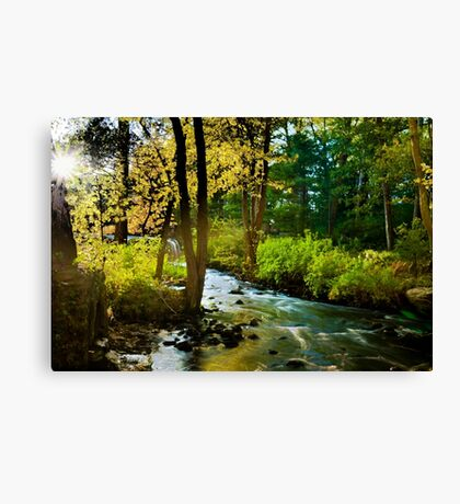 Walpole Town Forest  Canvas Print