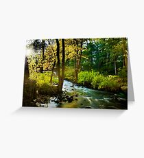 Walpole Town Forest  Greeting Card