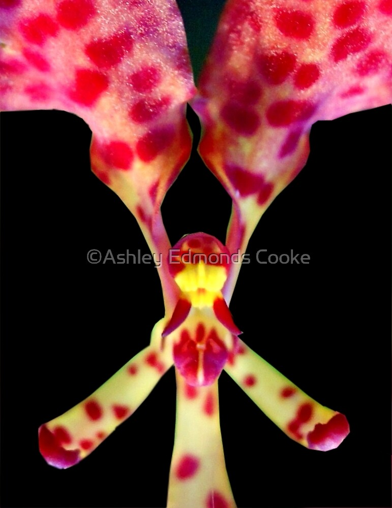 Breakin' Wind - Orchid Alien Discovery by ©Ashley Edmonds Cooke