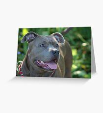 Blue pitbull Greeting Card
