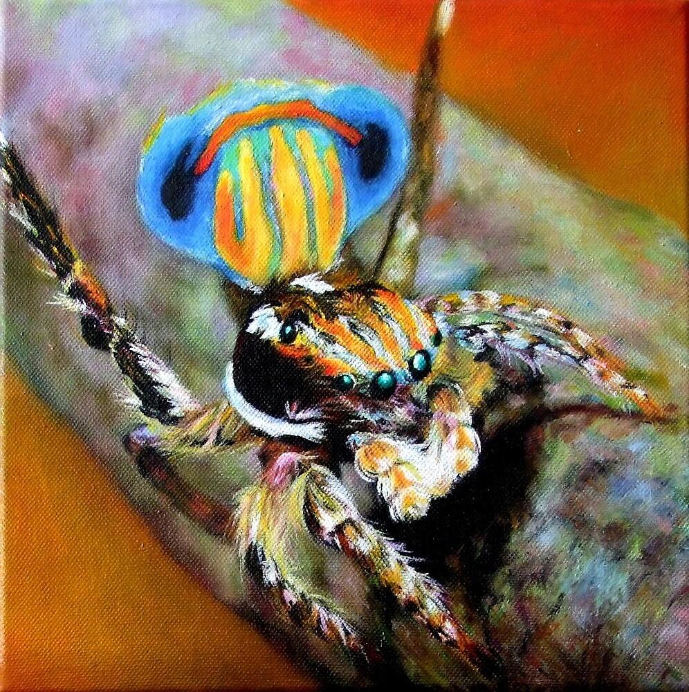 Peacock Spider by Nita Clifton