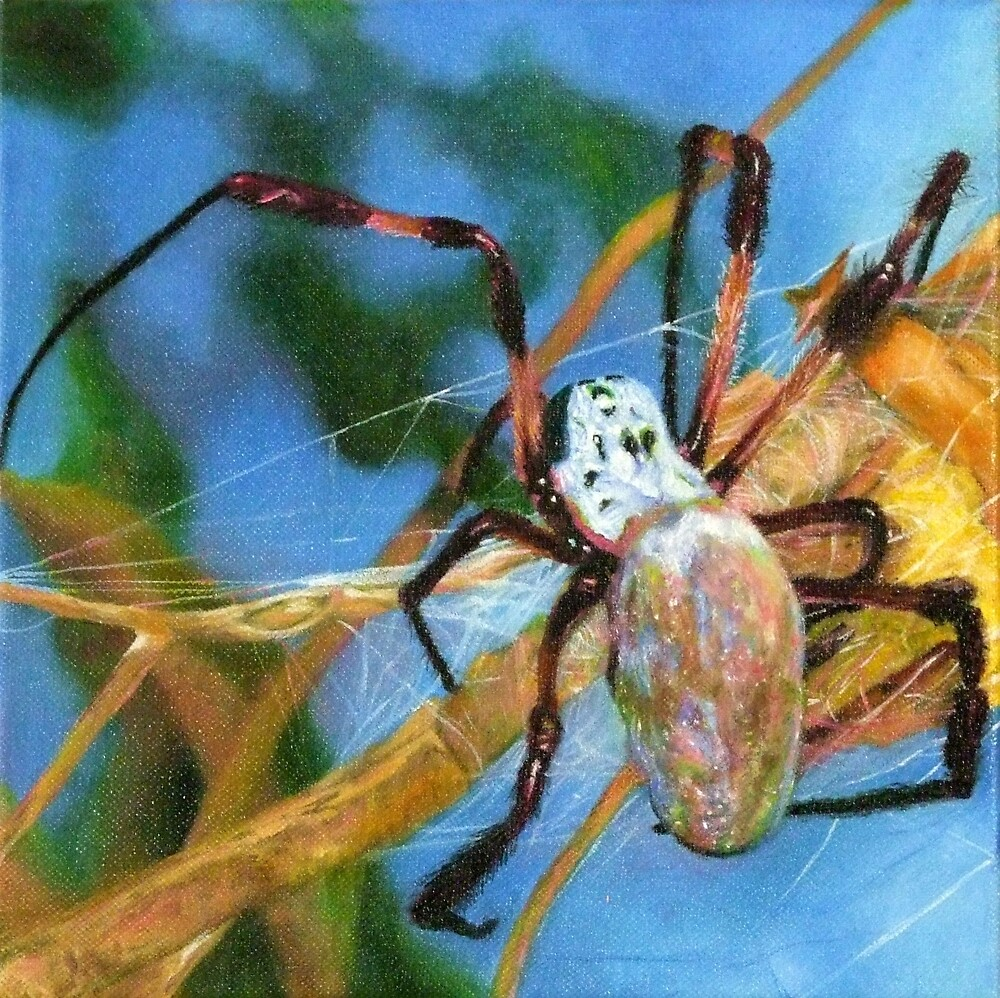 Orb Weaver Spider by Nita Clifton