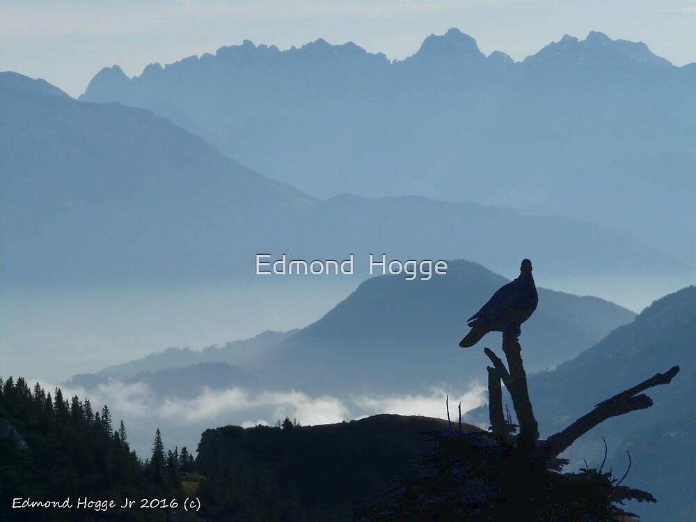 Blue Ridge Beauty by Edmond  Hogge