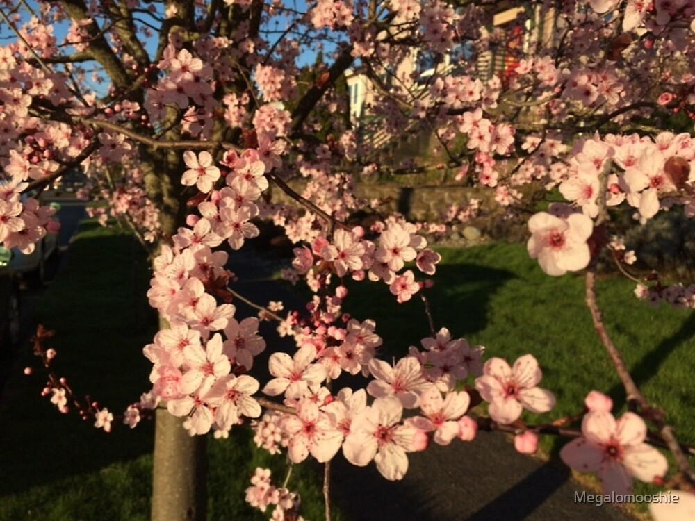 Blossom by Megalomooshie