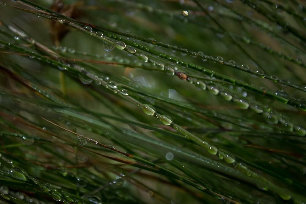 Morning Dew by thehikingviking