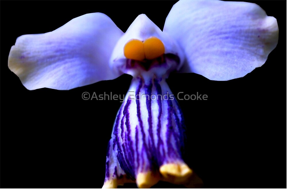 Stripe - Orchid Alien Discovery by ©Ashley Edmonds Cooke