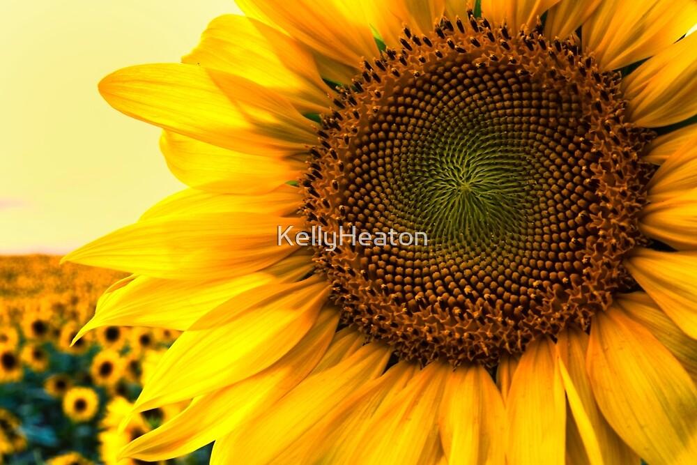 Close Up Sunflower by KellyHeaton