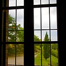 View From the Window by Barbara  Brown