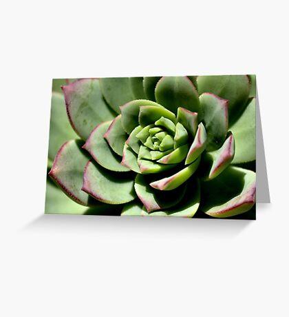 Shadows of Cactus Greeting Card