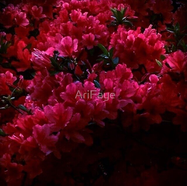 Red Flowers by AriFaye