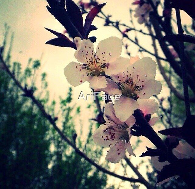 Plumb Blossoms 3 by AriFaye