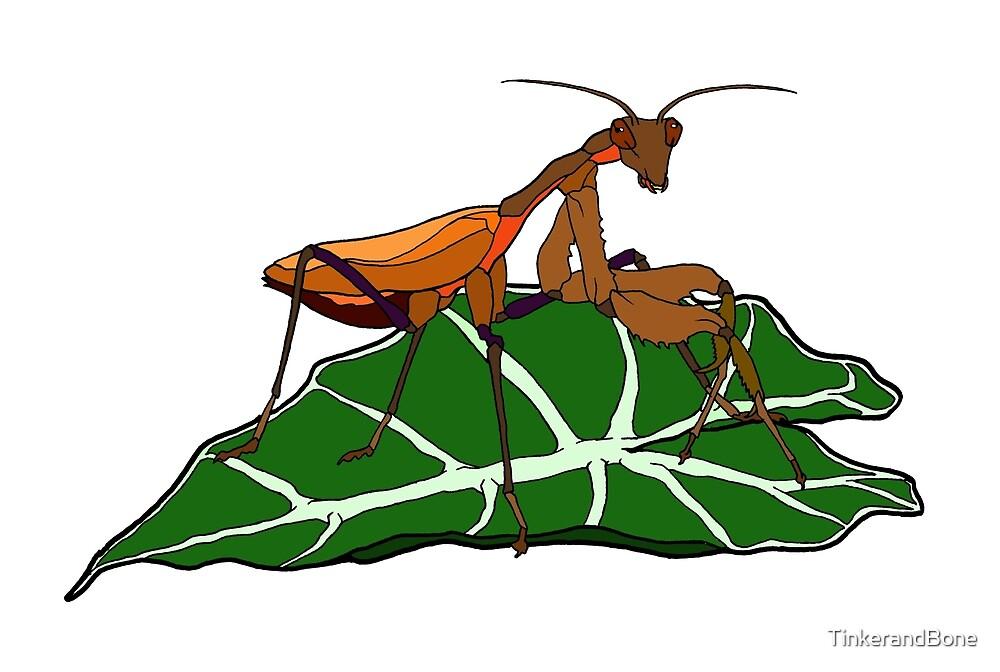 Brown Asian Mantis by TinkerandBone