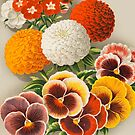 Pansies & Marigolds by madewithslnsw