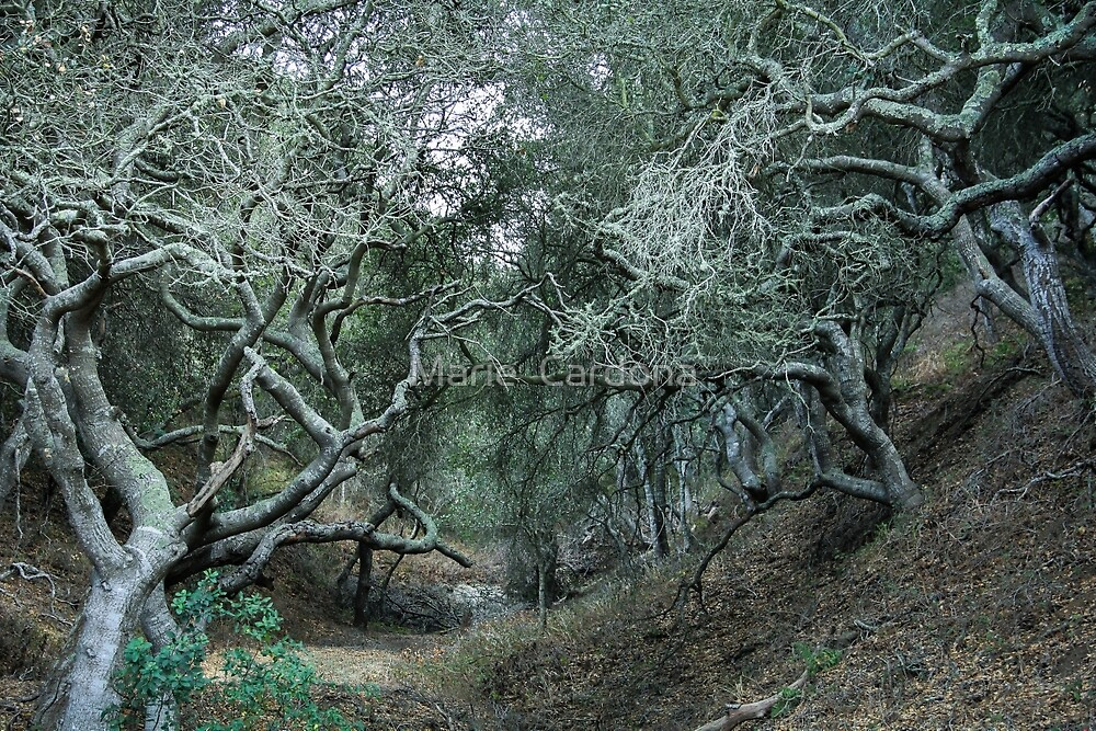 The Wise Trees by Marie  Cardona