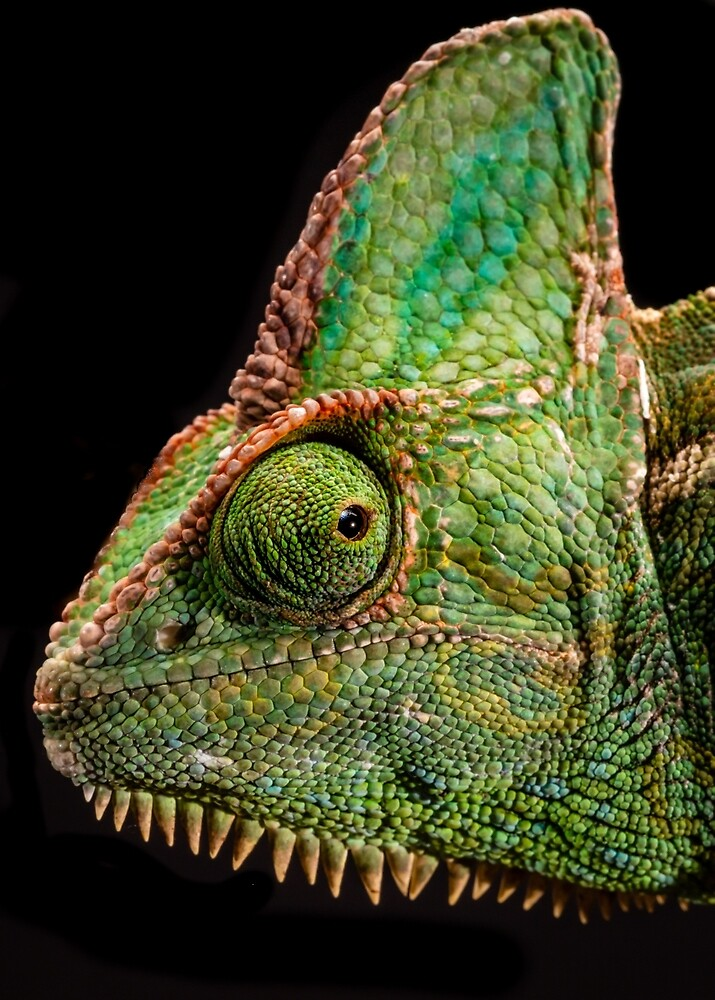 Chameleon  by Russell Charters