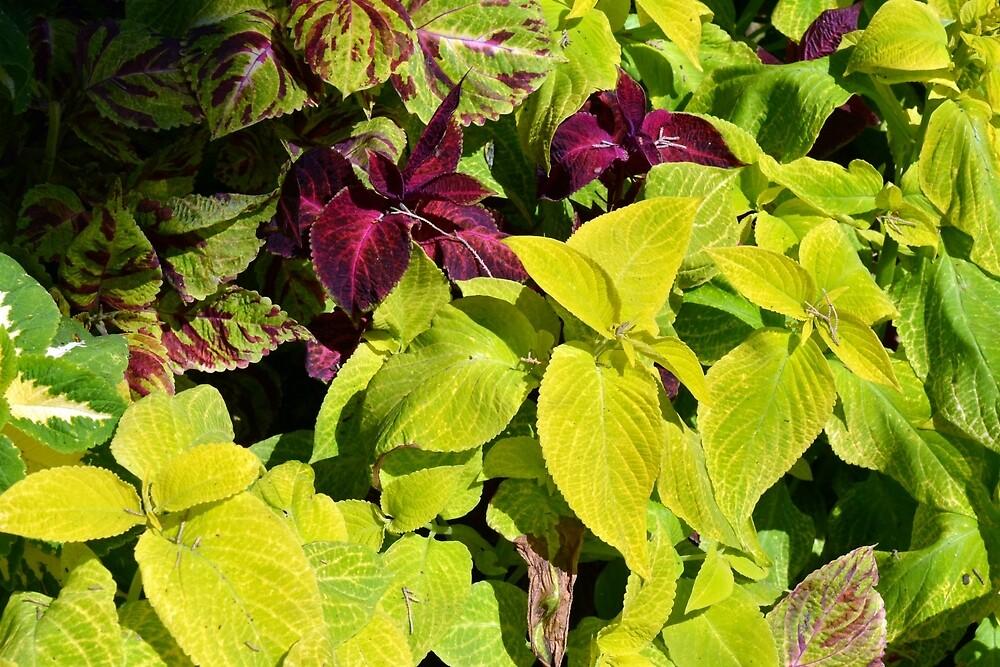 Colorful green leaves pattern by oanaunciuleanu