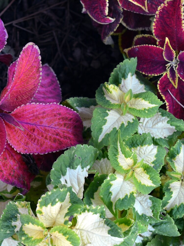 Colorful green and purple leaves pattern by oanaunciuleanu