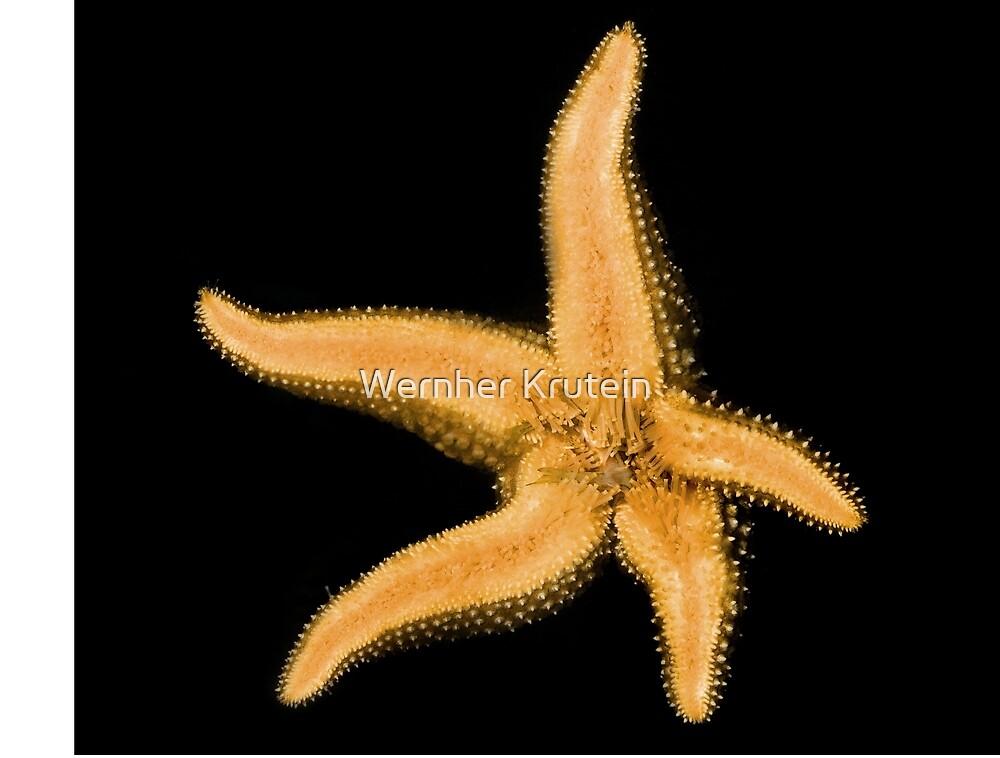 Starfish Graphic by Wernher Krutein