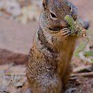 Squirrel in Zion by samsheff