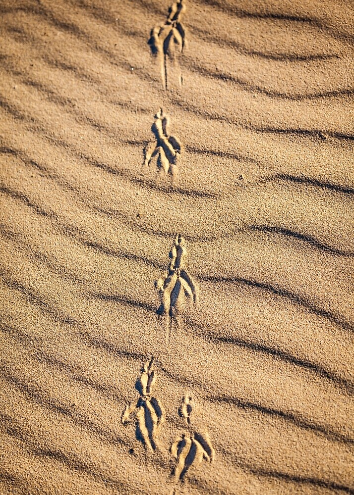 Tracks In The Sand by Russell Charters