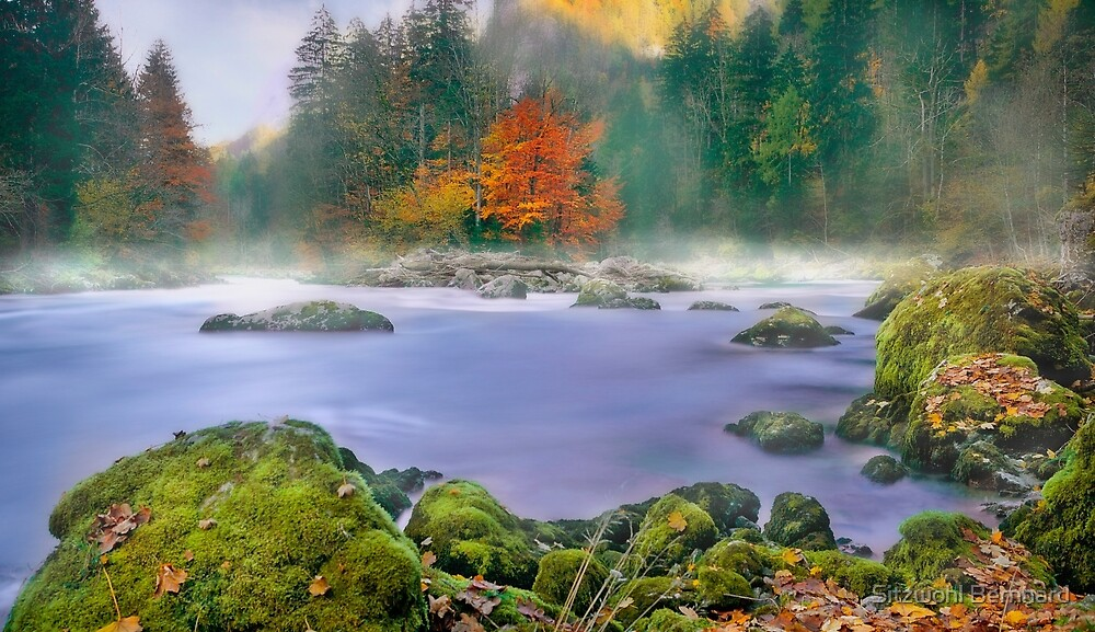 Morning fog at the river enns by Delfino