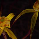 yellow orchid by peterbeaton