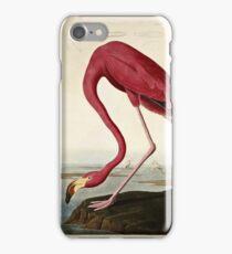 John James Audubon, American Flamingo, 1838  iPhone Case/Skin