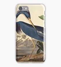 John James Audubon - Louisiana Heron1834  iPhone Case/Skin
