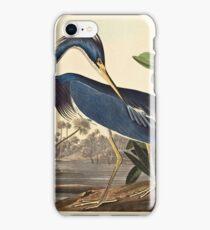 John James Audubon - Louisiana Heron1834  iPhone Case/Skin