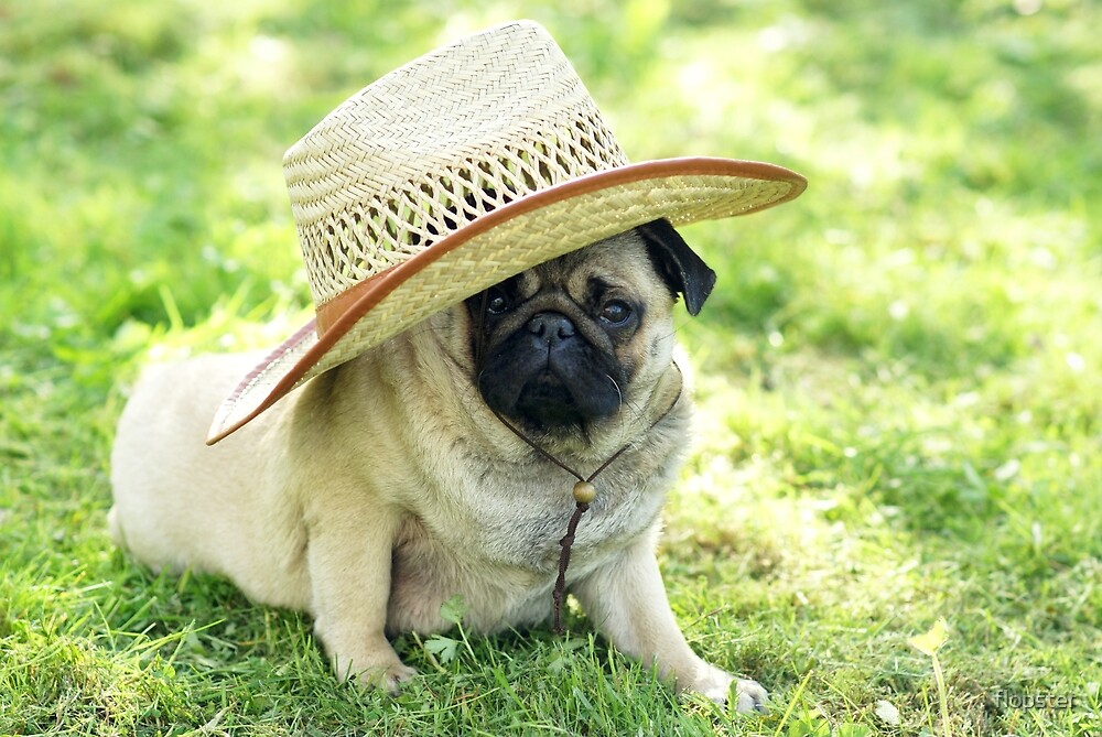 Young pug with a hat by flopster