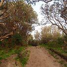 heading to Bushrangers Bay by jayview