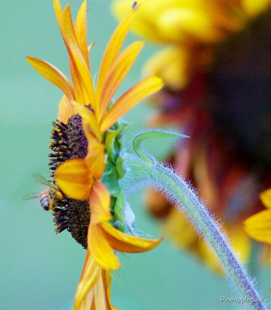Sunflower Hairs Photograph by Pineappledear