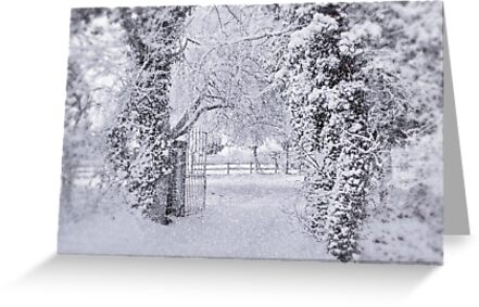 All Dressed in White !!! by AnnDixon