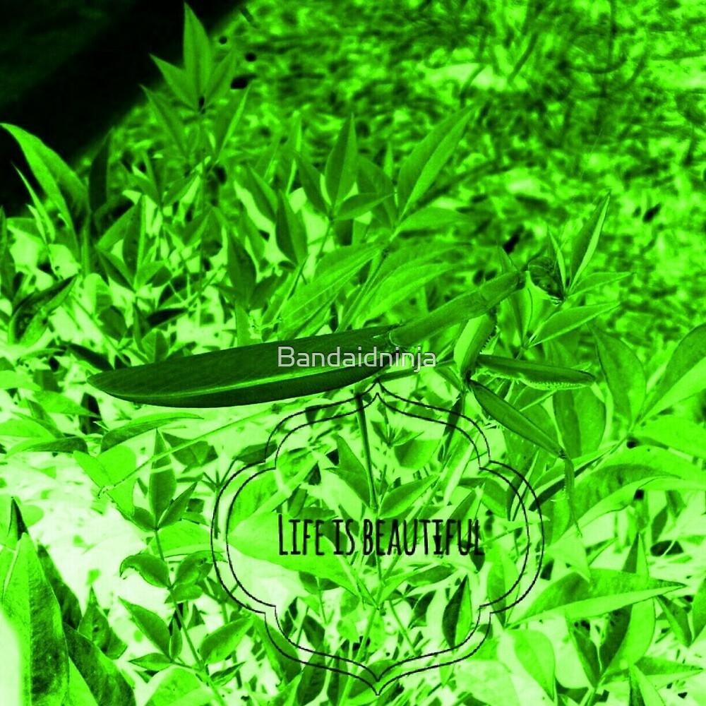 preying mantis pretty by Bandaidninja